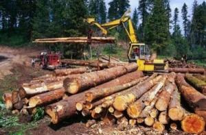 В Хмельницкой области убили журналиста, расследовавшего незаконную вырубку лесов