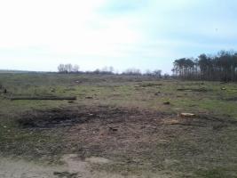 В Николаевском лесу вырубили 6 гектар деревьев