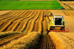 В Херсонской области создадут единый логистический центр для аграриев, желающих торговать со странами ЕС