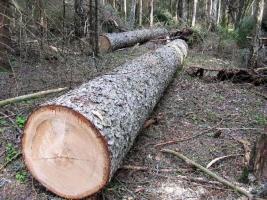 В Украине незаконную вырубку леса будут фиксировать с помощью дронов