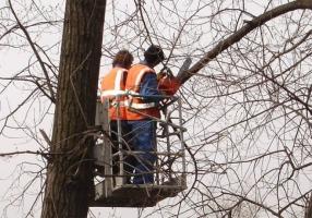 В Херсоне у половины деревьев заканчивается срок эксплуатации