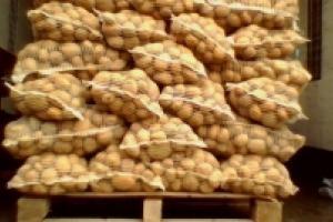 Из-за блокады Крыма серьезно пострадали украинские производители овощей