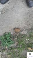 В Корабельном районе Николаева николаевец обнаружил гранату