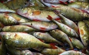 В Одесской области участились случаи браконьерства