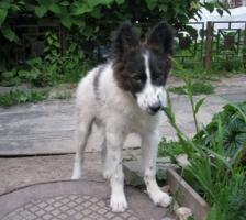 В Херсоне снова массово отравили собак