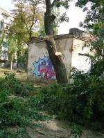 Николаевские коммунальщики вместе с сухостоем спилили и живые деревья