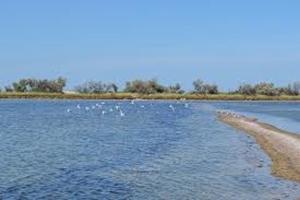 В Николаевской области открыто уголовное производство по факту браконьерства на территории Кинбурнской косы