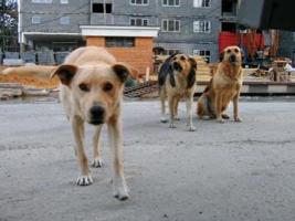 В Николаеве неизвестные массово отравили бездомных собак