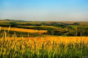 Уникальный заповедник на территории Николаевской области стал шире на 1335 гектар