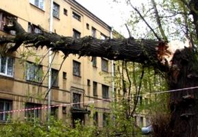 Херсонские чиновники саботируют спиливание аварийных деревьев – депутат