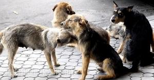 Массовое отравление собак в Херсоне – дело рук психически больных людей – мэр
