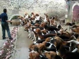 В Херсоне  будут бороться с бродячими собаками, используя опыт Николаева