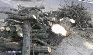 В Николаеве возле Дома культуры строителей снесли многолетние акации, чтобы поставить мусорный контейнер