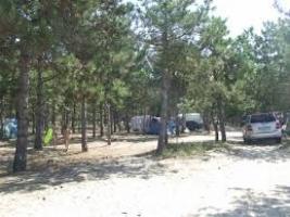 Суд отменил незаконные распоряжения Березанской РГА по использованию земель лесного фонда в Рыбаковке