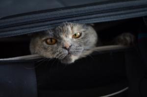Россельхознадзор не пустил из Херсонщины в Крым девять собак и кота