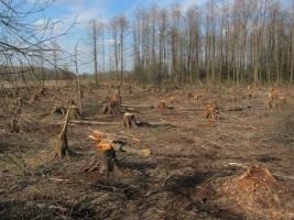 В Николаевской области военные незаконно вырубили деревья в лесополосе