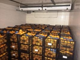Херсонских таможенников обвиняют в краже 10 тонн апельсинов