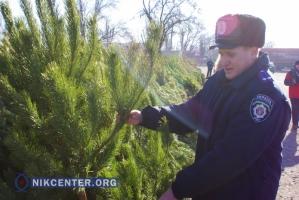 Херсонские полицейские не могут изымать незаконно продаваемые елки. Не на чем вывозить