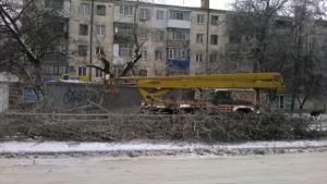 В Херсоне из-за сильного ветра и обледенения упали 40 деревьев