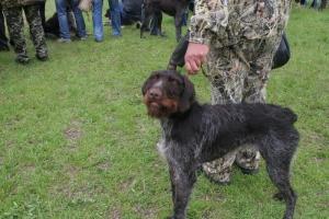 В Николаеве состоялась областная выставка охотничьих собак
