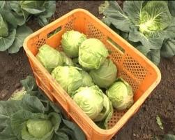 Экс-депутата Херсонского горсовета обвиняют в «овощном рэкете»