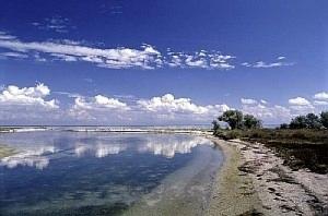 На Николаевщине прокуратура требует расторгнуть договор аренды земельного участка водного фонда