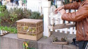 Экоинспекторы проснулись, провели рейд и выпустили 200 редких птиц