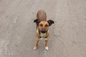 В Николаеве вскоре откроют Центр защиты животных