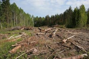 Херсонские милиционеры и общественники обсудили, как вместе будут спасать лес
