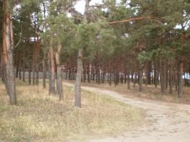 В Николаеве суд отобрал ещё один земельный участок у бизнесмена Пелипаса