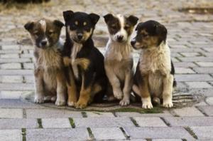 В Николаеве пройдет благотворительный концерт к Дню бездомных животных (ОБНОВЛЕНО)