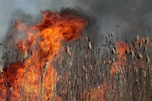 Пожар на Днепровских плавнях угрожал дачам херсонцев