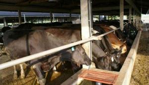 Россия запретила поставку произведенных в Украине кормов для животных