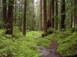 На Николаевщине государству вернули земельный участок лесного фонда стоимостью более 9 млн. грн.