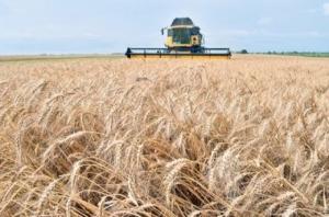 Украина попала в ТОП-3 мировых экспортеров зерна