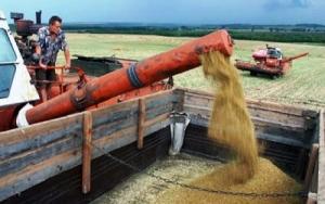В Николаевской области намолотили 500 тыс. тонн зерна