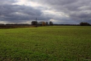 В Николаевской области предприниматели незаконно пользовались 275 га земли учебных учреждений
