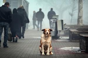 Херсонские волонтеры подсчитали городских бездомных собак