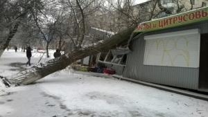 В Херсоне упавшее обледеневшее дерево раздавило несколько киосков