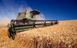 Обнародован прогноз по урожаю и экспорту украинского зерна