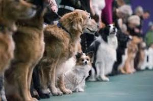 25 сентября в Николаеве пройдет выставка собак всех пород
