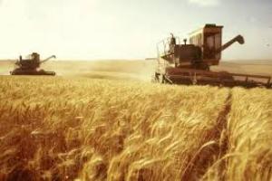 На Николаевщине приступили к уборке урожая