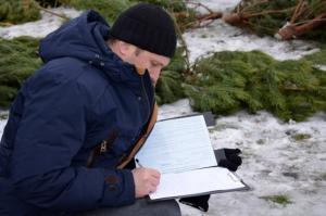 В Николаеве полиция открыла «сезон охоты» на продавцов незаконных елок