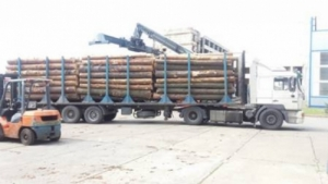 В Одесской области СБУ остановила многомиллионную контрабанду древесины