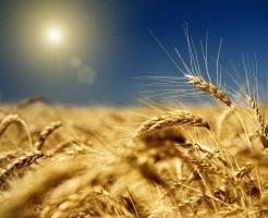 Если произойдет обвал цен на зерно в июле-августе, аграрии обещают