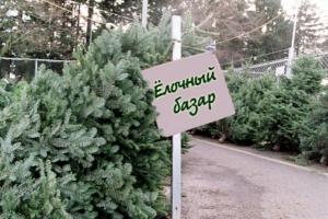 В Херсонском регионе новогодние елки поднялись в цене