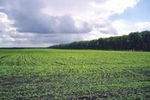 На Николаевщине предприятие самовольно захватило почти 548 га сельскохозяйственных земель