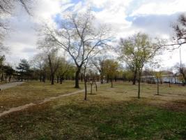 Николаевский департамент ЖКХ тратит сотни тысяч на посадку деревьев, однако по факту их нет