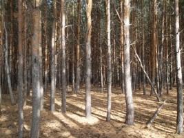 На Николаевщине вернули в госсобственность около 5 тыс. кв. метров лесного фонда
