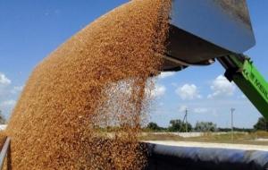 За полгода Украина экспортировала более 23 млн тонн зерновых